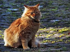 """""""Maledetto gatto"""" immagini dedicate alla  canzone omonima di Lucio Battisti"""