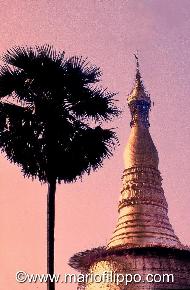MYANMAR -YANGON-TEMPIO D'ORO